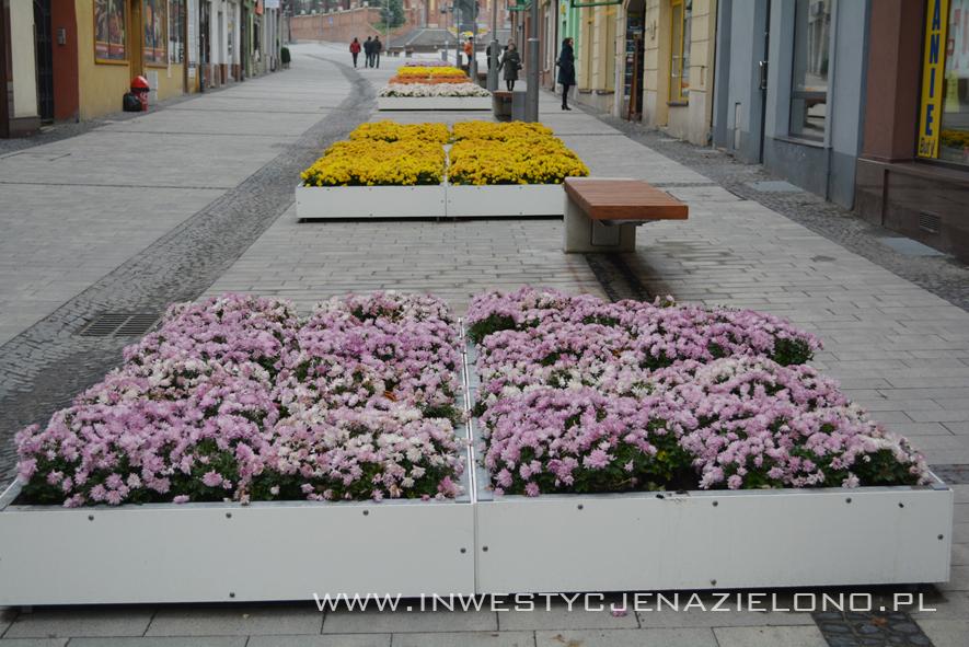 chryzantemy zieleń miejska