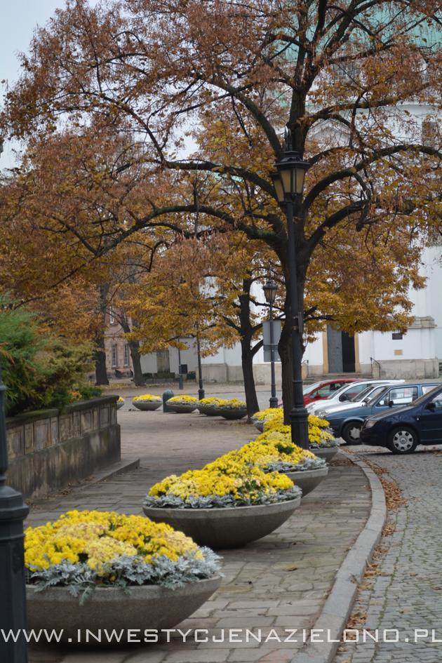 zieleń miejska
