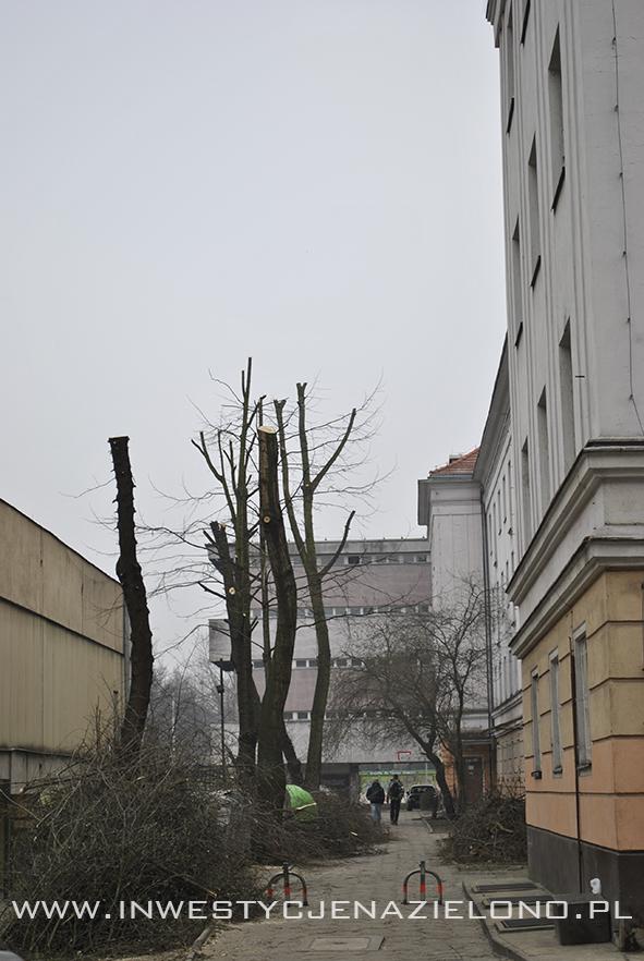 ogławianie drzew