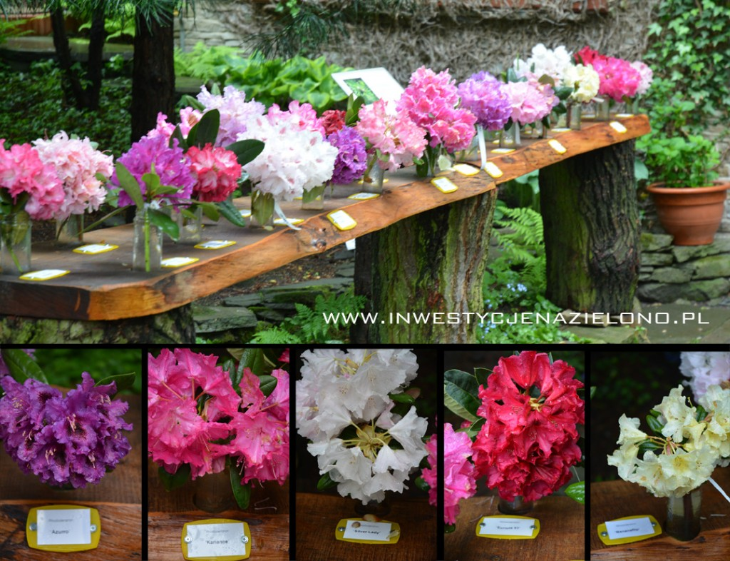 1 rododendrony